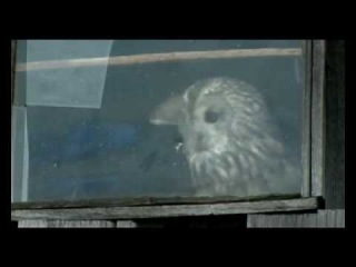 Tawny Owl in the house. Chernobyl. ������� ����� � ����. ���������