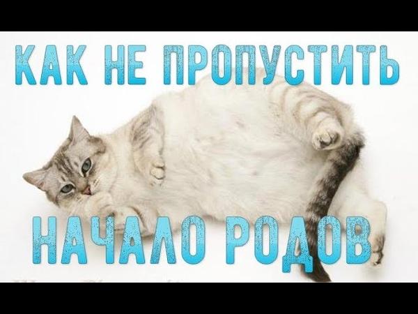 Как понять, что кошка скоро родит? Начало родов у кошки