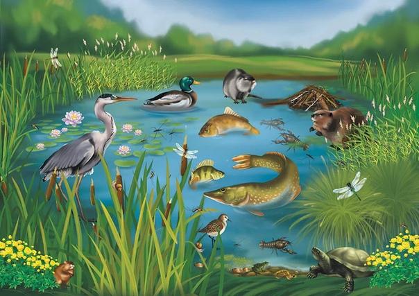 Животный мир водоемов Животный мир водоемов представлен организмами, являющимися либо пищей для рыбы, либо ее врагами. Многие рыбы на ранних стадиях развития питаются различными простейшими,