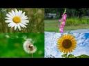 Карточки Домана Часть 10 Цветы