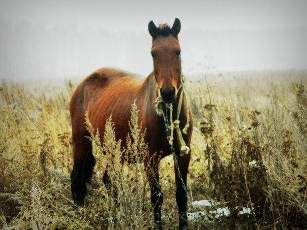 Западносибирская лайка и другие в Челябинской области - Страница 19 QNNfGOjBr54
