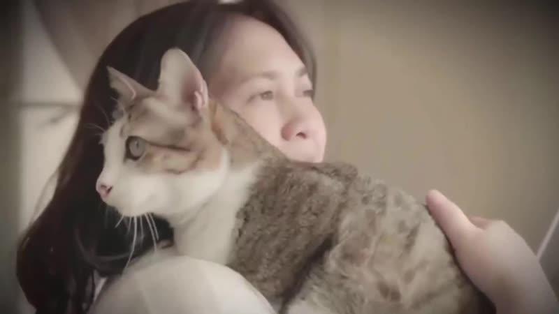Кот по кличке Кенгуру