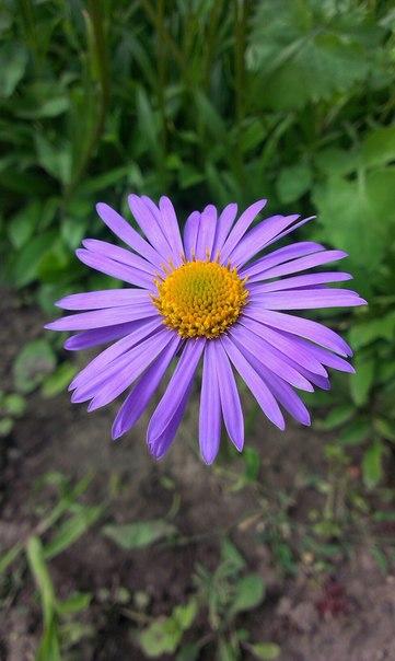 Цветы из моего сада и дома!