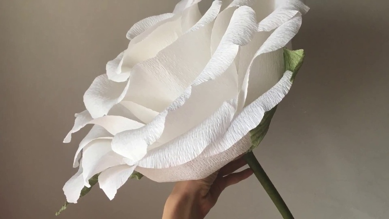 Пошаговый МК.Большая роза из гофрированной бумаги для фотосесии.A big rose out of paper