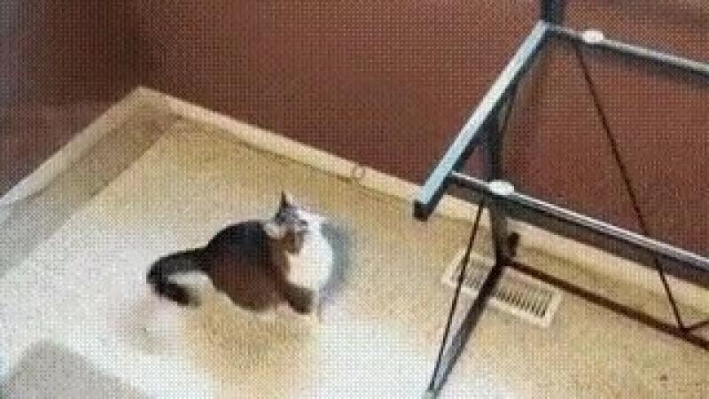 Снял стеклянную столешницу, кот не понимает, почему не получается запрыгнуть как раньше
