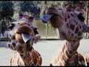 Приколы с животными. Топовая подборка! Funny videos.