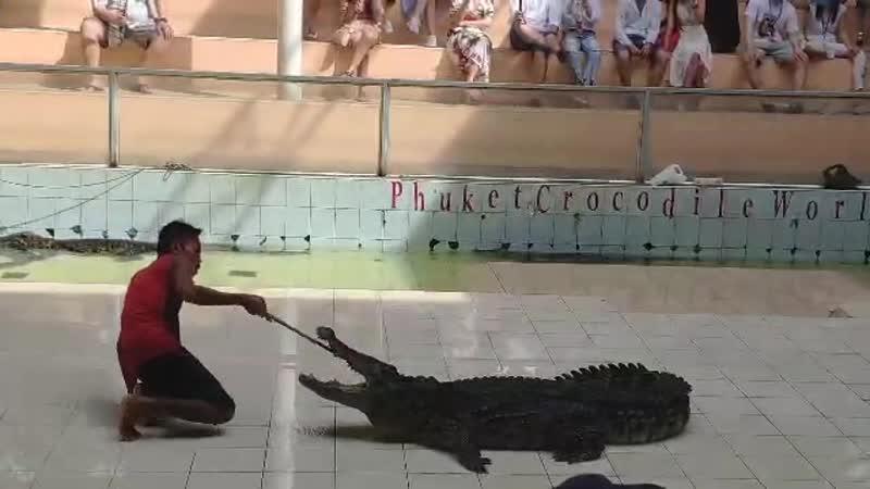 Смертельный номер с крокодилом на Пхукете (Полякова Елена)