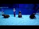 Москвариум шоу Тайна четырех морей моржи