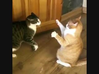 Animals r us в твиттере «using the force httpstcowjn4qajatz»