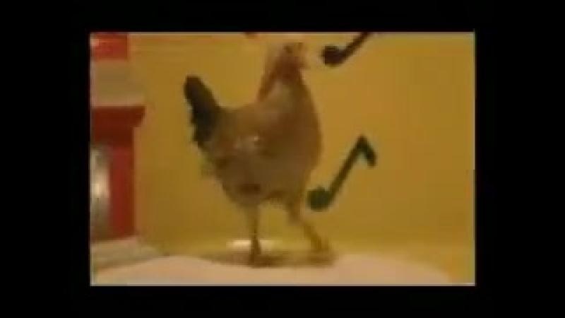 цыпа танцует 😂