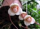Такие вот орхидеи. Когда у природы свое чувство юмора