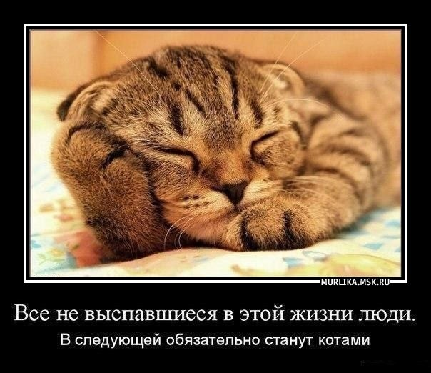 Все не выспавшиеся в этой жизни люди в следующей обязательно станут котами