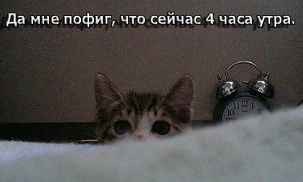 http://cs425823.vk.me/v425823566/16a5/30xYhhcbk4I.jpg