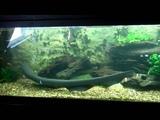 eel feeding