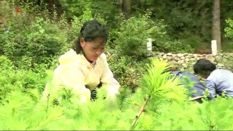 푸른 숲의 참된 주인들 -운산군 북진로동자구 산림감독원이였던 강윤경일가를 찾아서-