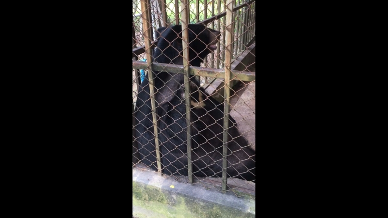 Толстый медведь