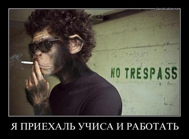 http://cs405017.userapi.com/v405017192/35bb/HN1d7slFkBQ.jpg