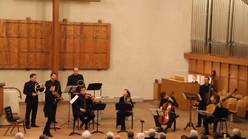 G. P. Telemann - Concerto in D TWV 54:D2 per 3 Corni da Caccia, Violino ed Orchestra - YOFIN Barockensemble Zurich