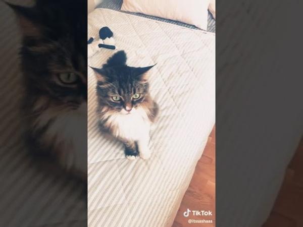 Если ты щастливый котик скажи мяу