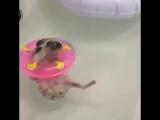 Ёжик в бассейне (VIDEO ВАРЕНЬЕ)