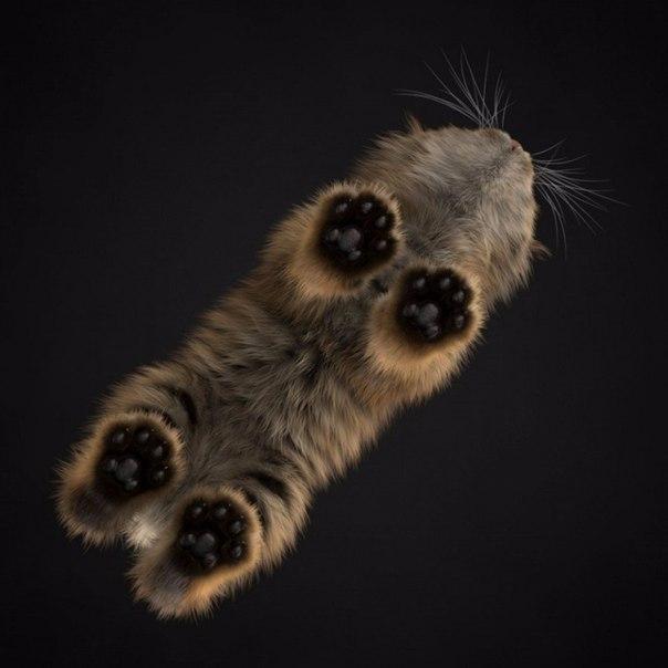 Кот с необычного ракурса