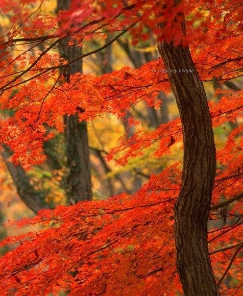 Осень в лесу...
