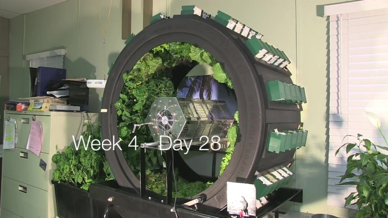 6 Week Volksgarden Test with Hydro Grows Vertical Light