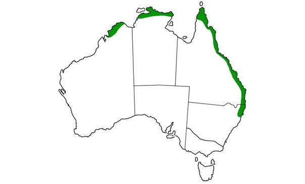 Ареал обитания: по дуге вдоль восточного побережья от северного Нового Южного Уэльса до Брисбэна и северной Западной Австралии. Они также любят охотиться на полях сахарного тростника.