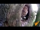 Белка vs сова Как птица и грызун воюют за жилплощадь