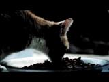 Зомб-Дворовый кот
