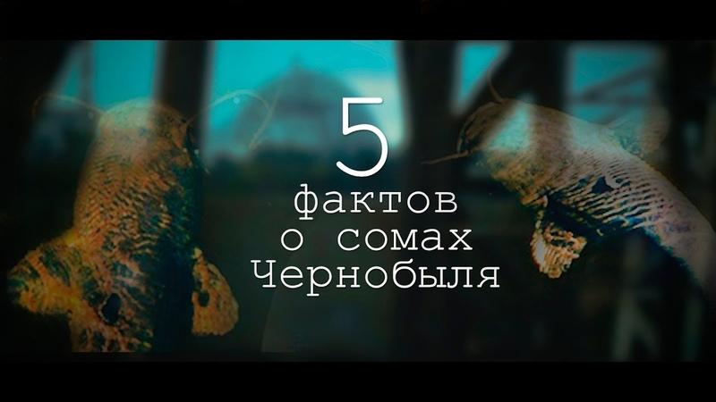 МУТАНТЫ ЧЕРНОБЫЛЯ, МИФ ИЛИ ПРАВДА? КОРМИМ 2-МЕТРОВЫХ СОМОВ! 5 ФАКТОВ! ДЕЛИМСЯ НАШИМИ ВПЕЧАТЛЕНИЯМИ!