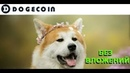 заработать без вложений dogecoin