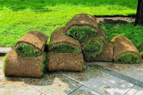 Шаг за шагом: укладываем газон