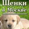 Щенки в Москве (отдам, куплю, продам)