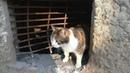 🔴Ради кошек в России запретят замуровывать подвалы