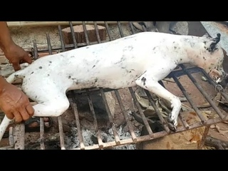 Amazing cooking dogs recipe -ASMR eating dog -Traditional food -Village food factory -Asian food