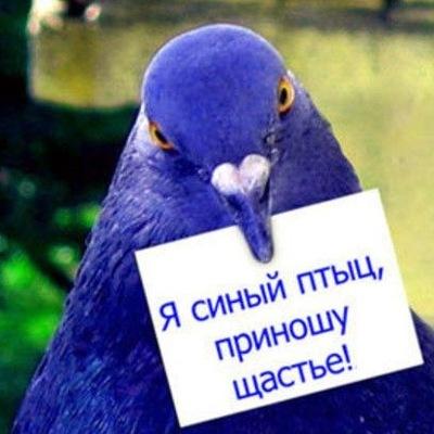 Чистильшик По-Закону, 29 июля , Санкт-Петербург, id206206861