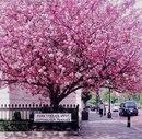 Цветущий Лондон, Англия