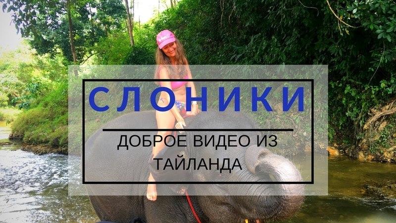 Слоны в Тайланде Увлекательное доброе видео