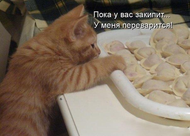 http://cs421031.vk.me/v421031064/4fe7/mP5ZvxYy6e4.jpg