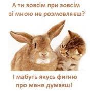 прикол,прикольно,смешно,животные,весело,другу,подруге,улыбнись,настроение,хорошего настроения,настрий,усміхнись,тварини,кіт,смішно,