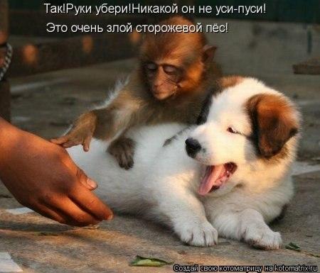 http://cs323425.userapi.com/v323425157/442/21G9HHGAetA.jpg