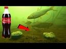 КОКА КОЛА как АКТИВАТОР КЛЕВА Работает Подводная съемка