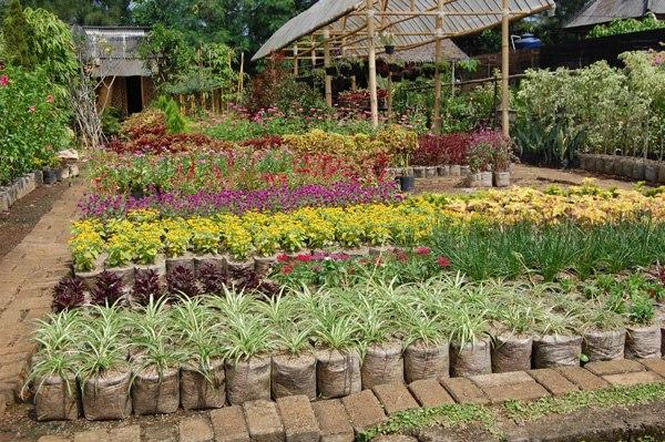 Помогайте - ландшафтный дизайн в Индонезии :) Eqw_W1TUyeU