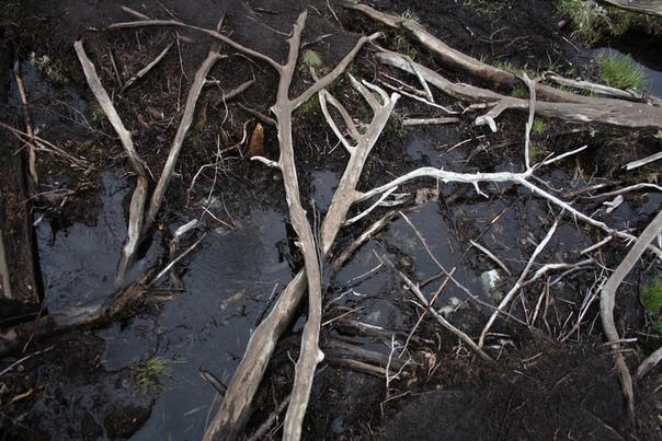 Очень красивые корни.