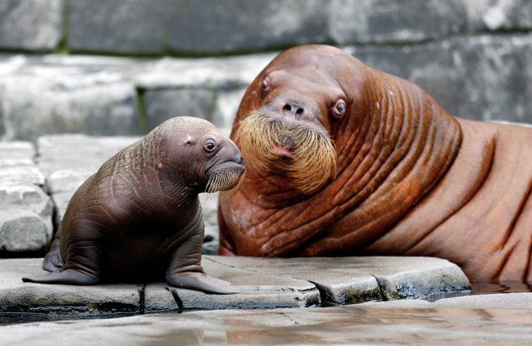Зверушки. Фото © REUTERS/ Morris Mac Matzen