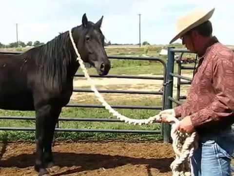 Bucking Stock Gelding ,Kill Buyer Rescue,Session 2, Sean Davies, Coloradoreinsman