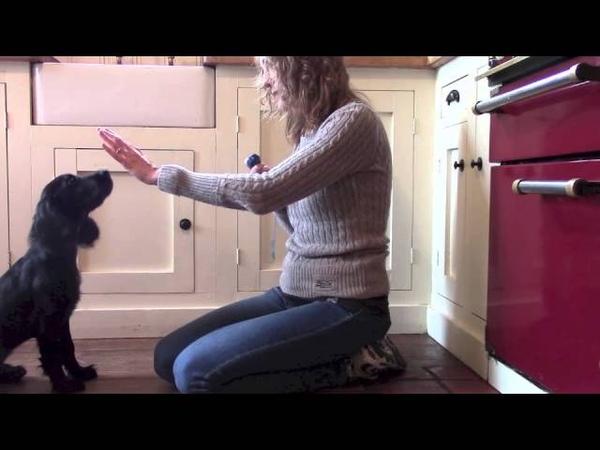 Учим щенка касаться руки - мишени