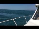 Яхта, дельфины в черном море