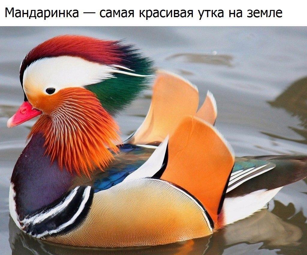 https://cs7054.vk.me/c635106/v635106275/cb76/SmVl7JI8OOc.jpg